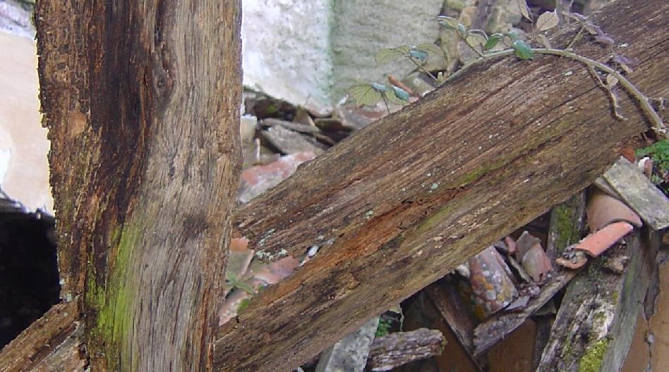 Des trucs tout vermoulus - Recouvrir poutre bois ...